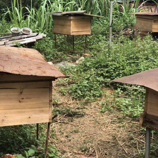 福建省龙岩市永定区 蜂蜜