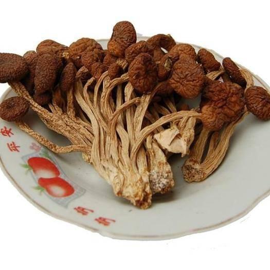古田縣 茶樹菇