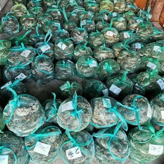 江苏省盐城市建湖县兴化大闸蟹 螃蟹的品质可以保证的
