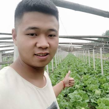 ?【山东万亩白菜产区】?【沙土地】?夏阳白菜2-5斤