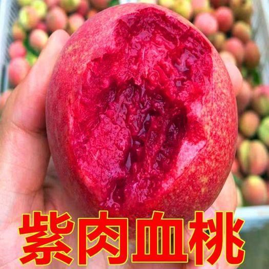 平邑县 血桃苗,黑桃苗,水密桃,品种齐全价格优惠,基地直销当年挂果