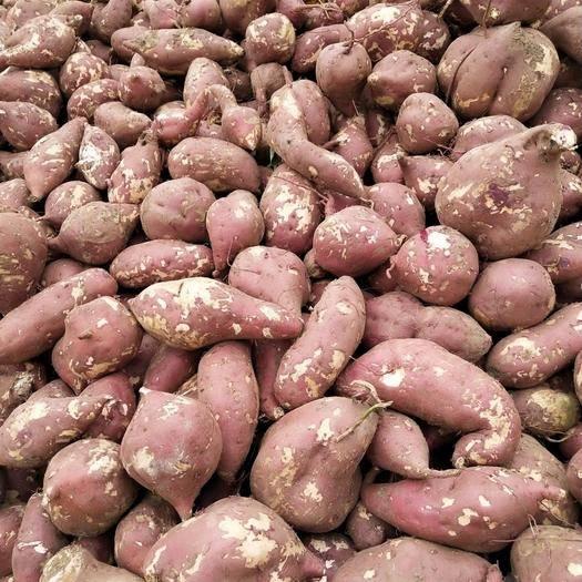 安徽省亳州市利辛县商薯19号 混装通货 红皮