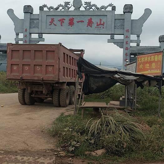 湖南省怀化市麻阳苗族自治县 麻阳长寿之乡,高山有机猕猴桃,香甜可口,