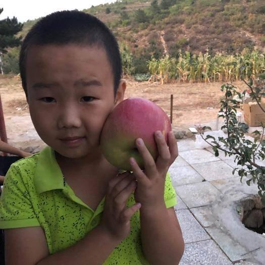 内蒙古自治区赤峰市宁城县 酸甜口味,清脆,内蒙新品,不同于其他地区苹果。