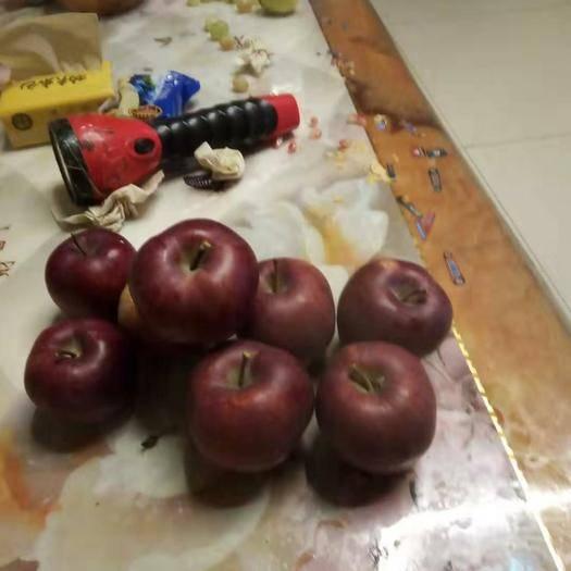 甘肃省定西市渭源县 甘肃花牛苹果,脆,甜,自家种,