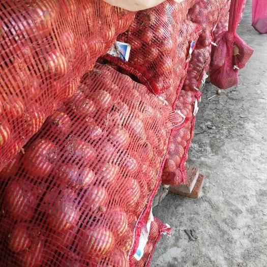 吉林省长春市农安县 大量出售毛葱,价格优惠,质量好。