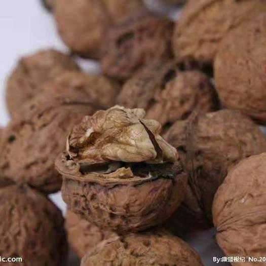 云南省保山市隆阳区 云南核桃    又称胡桃,羌桃,为胡桃科植物。与扁桃、