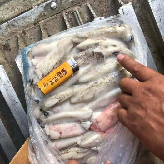 广东省茂名市电白区冷冻鱿鱼 刚到白鱿鱼