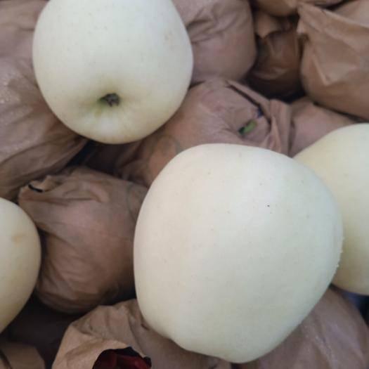 辽宁省大连市瓦房店市黄元帅苹果 黄元帅平果大量供应,耐储存,耐运输,个大,表光好。