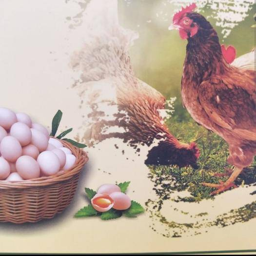 辽宁省大连市庄河市 正中山林溜达鸡蛋