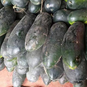 黑皮冬瓜 20~30斤 地冬瓜