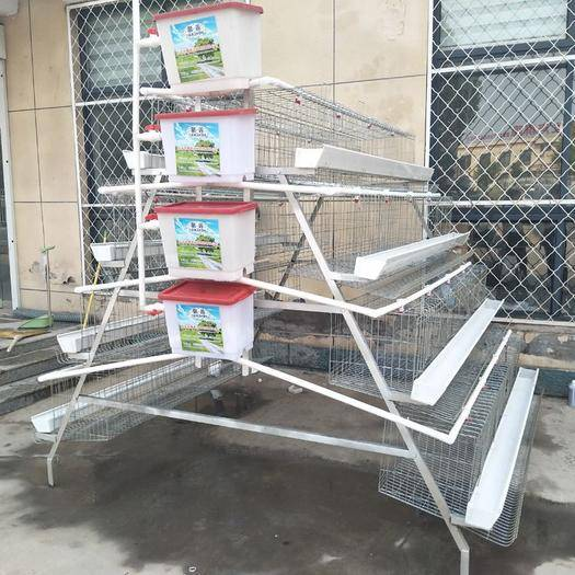 河北省衡水市安平县 鸡笼热镀锌蛋鸡笼三层蛋鸡笼养鸡笼