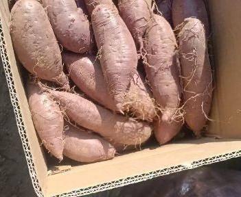 紫罗兰紫薯 3两以上精品紫罗兰商品薯
