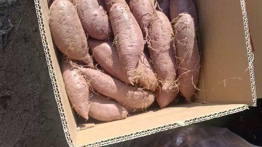 山东省济宁市邹城市紫罗兰紫薯 3两以上精品紫罗兰商品薯