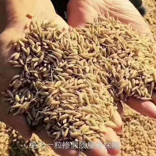 黑龙江省哈尔滨市五常市五常大米 新米上市