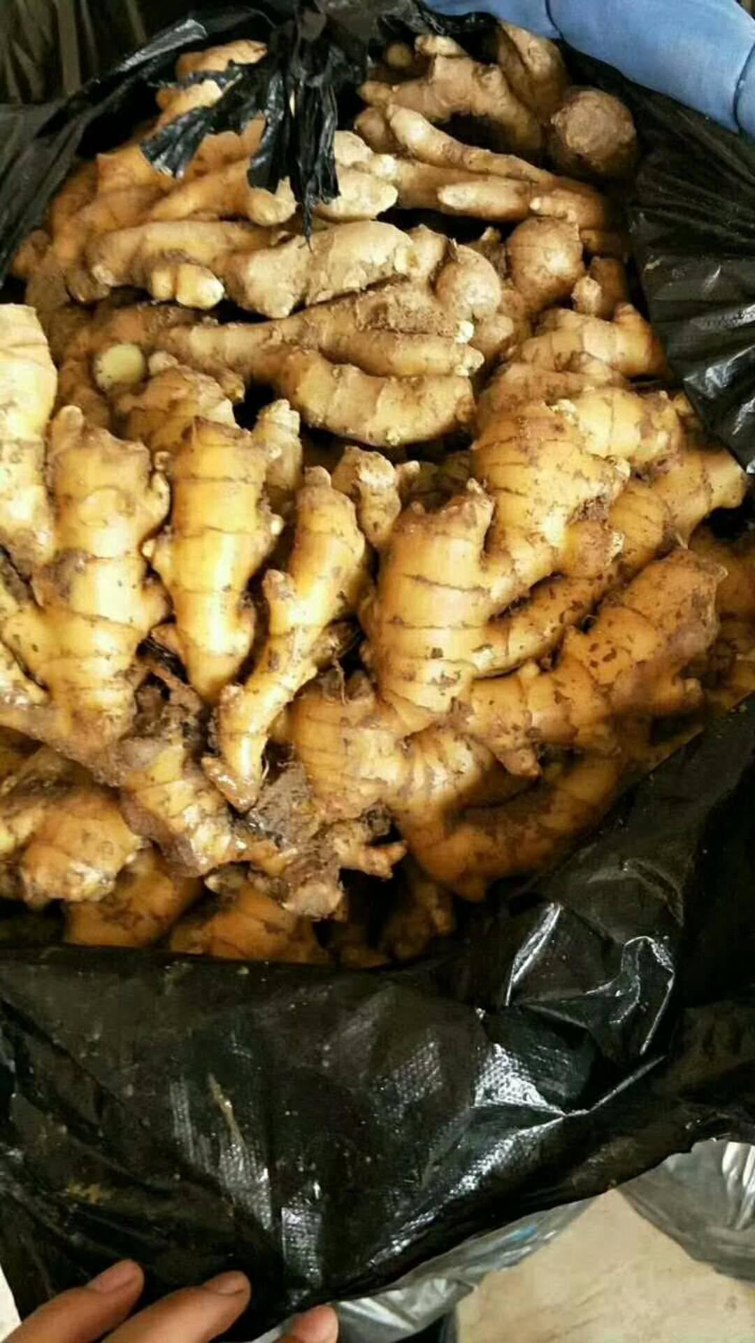 山东黄姜优质黄姜可提供人工包装水洗等服务一条龙