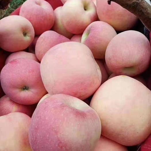 陕西省咸阳市礼泉县红富士苹果 套袋红富士,10斤35,自产自销