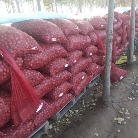 吉林省长春市农安县毛葱种子 97%以上