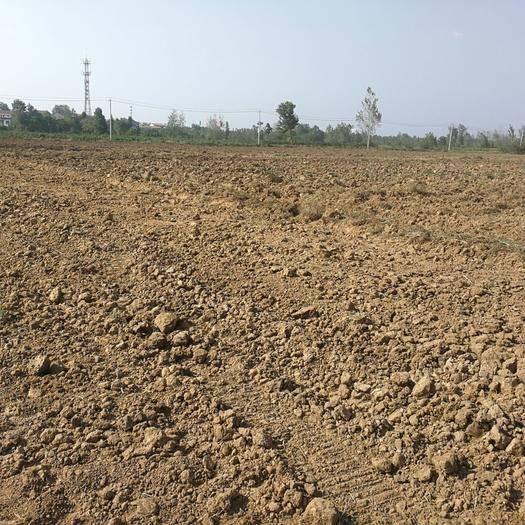 湖北省武汉市黄陂区水浇地 500亩肥沃的武汉近郊(汉口北)菜地招租