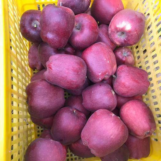 甘肃省天水市清水县花牛苹果 70mm以上 全红 膜袋