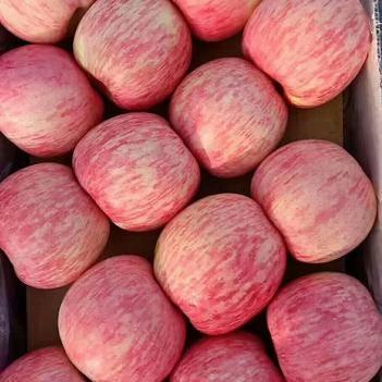 洛川苹果 洛川红富士