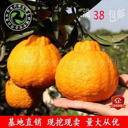 四川省成都市简阳市不知火苗 优质不知火柑橘苗  丑柑苗  证件齐全品种保证