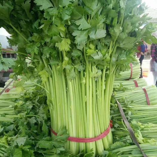 江苏省徐州市铜山区 精品芹菜大量上市
