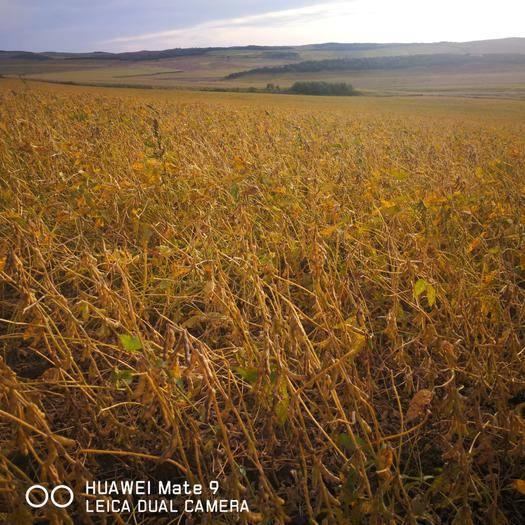 内蒙古自治区呼伦贝尔市莫力达瓦达斡尔族自治旗旱地 大量耕地出租