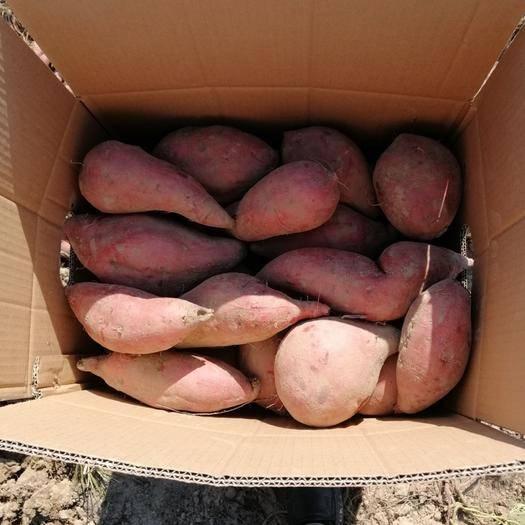 湖南省永州市江华瑶族自治县烟薯25 供应西瓜红