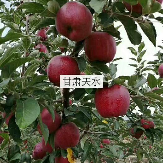 甘肃省天水市甘谷县种植土 甘肃花牛果汁香甜可口,自家种植无公害纯天然鲜果,即需销售!