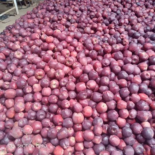 甘肃省陇南市礼县 花牛苹果处理价。需要的老板及时联系