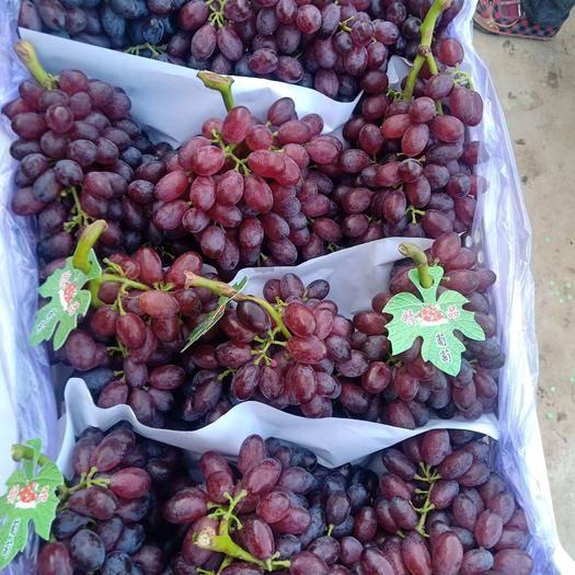 山东省青岛市莱西市克瑞森无核葡萄 1-1.5斤 5%以下 1次果