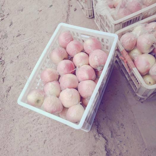 河南省商丘市虞城县红富士苹果 80mm以上 片红 膜袋