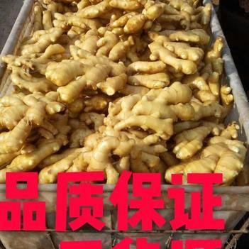 仔姜 精品新姜 老姜【窖藏姜】 【大黄姜】【小黄姜】产地批发供应