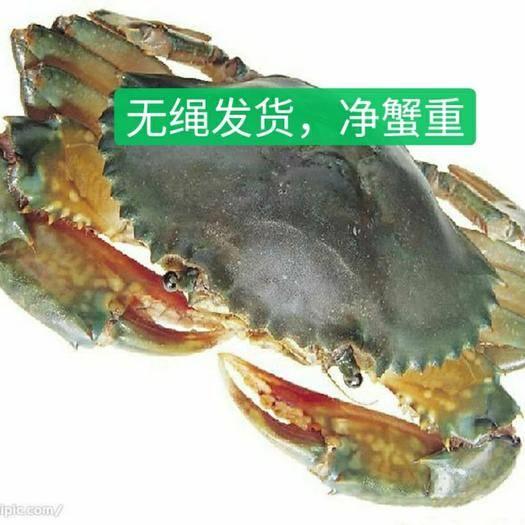 漳州东山县 福建青蟹膏蟹水产鲜特产菜蟹红鲟