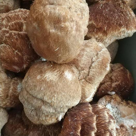 河北省保定市安国市东北猴头蘑 食用 产地货源 平价直销 袋装