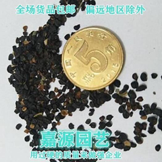 成都锦江区 石竹种子包邮