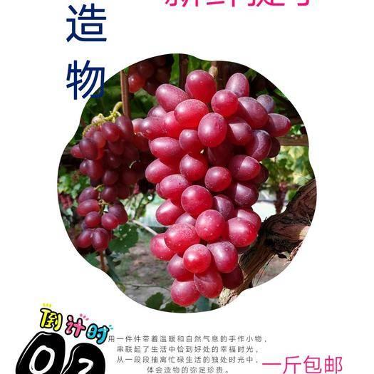 兴安县 广西桂林好水自家种的温克葡萄一斤试吃价15元,包邮香甜可口