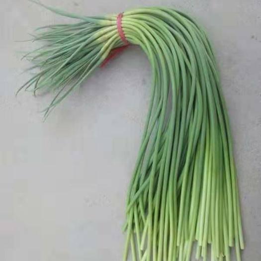 濟寧金鄉縣紅帽蒜苔 質量好,價格便宜,產地一級批發