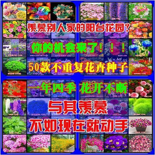 南宁西乡塘区太阳花种子 50款不同的花组合活动包邮了