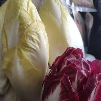 """红菊苣 欧洲皇家贵族蔬菜,原产自荷兰,芽球玉兰,被誉为""""蔬菜王子。"""