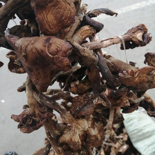 黑龙江省大兴安岭地区呼玛县榛蘑 野生 干货
