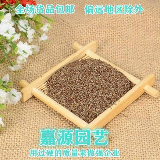 成都锦江区 马鞭草种子包邮