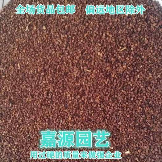 成都锦江区 屈曲花种子包邮