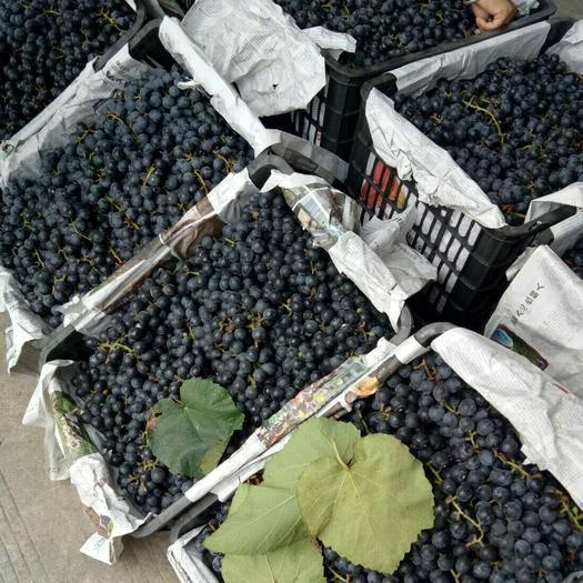 南宁 今年新鲜纯天然葡萄酒,饮料型,已过漏好,越保存越清澈!