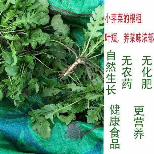 河南省商丘市虞城县 野生小荠菜,香味浓郁!3斤一件18.8