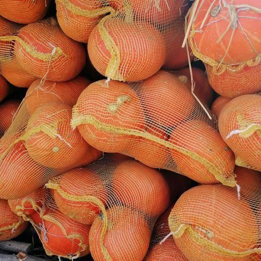 呼和浩特武川县 捍地南瓜甜而可口,非常耐储存,