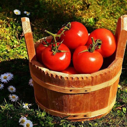 米易縣 西紅柿連箱裝包郵