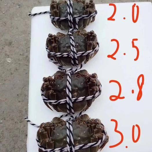 監利縣 洪湖大閘蟹口感好。肉質包滿。價美物廉。斤兩不限,多少包發。