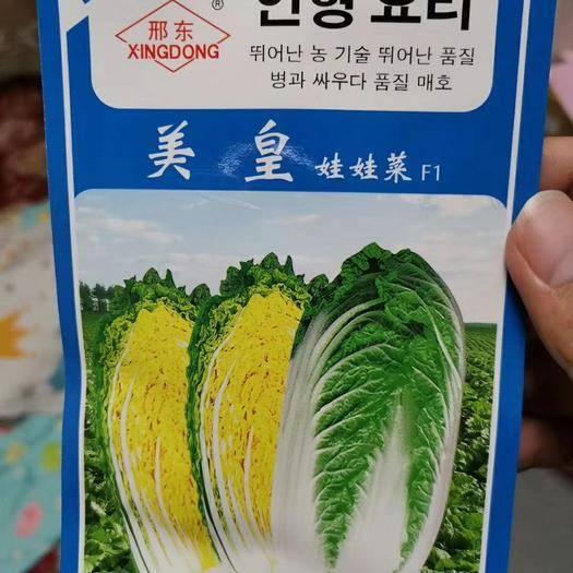郑州二七区娃娃菜种子 美黄娃娃菜F1